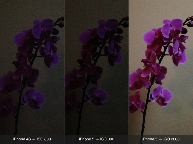 Camera+ & Camera+ on the iPhone 5 now with improved low-light shooting!